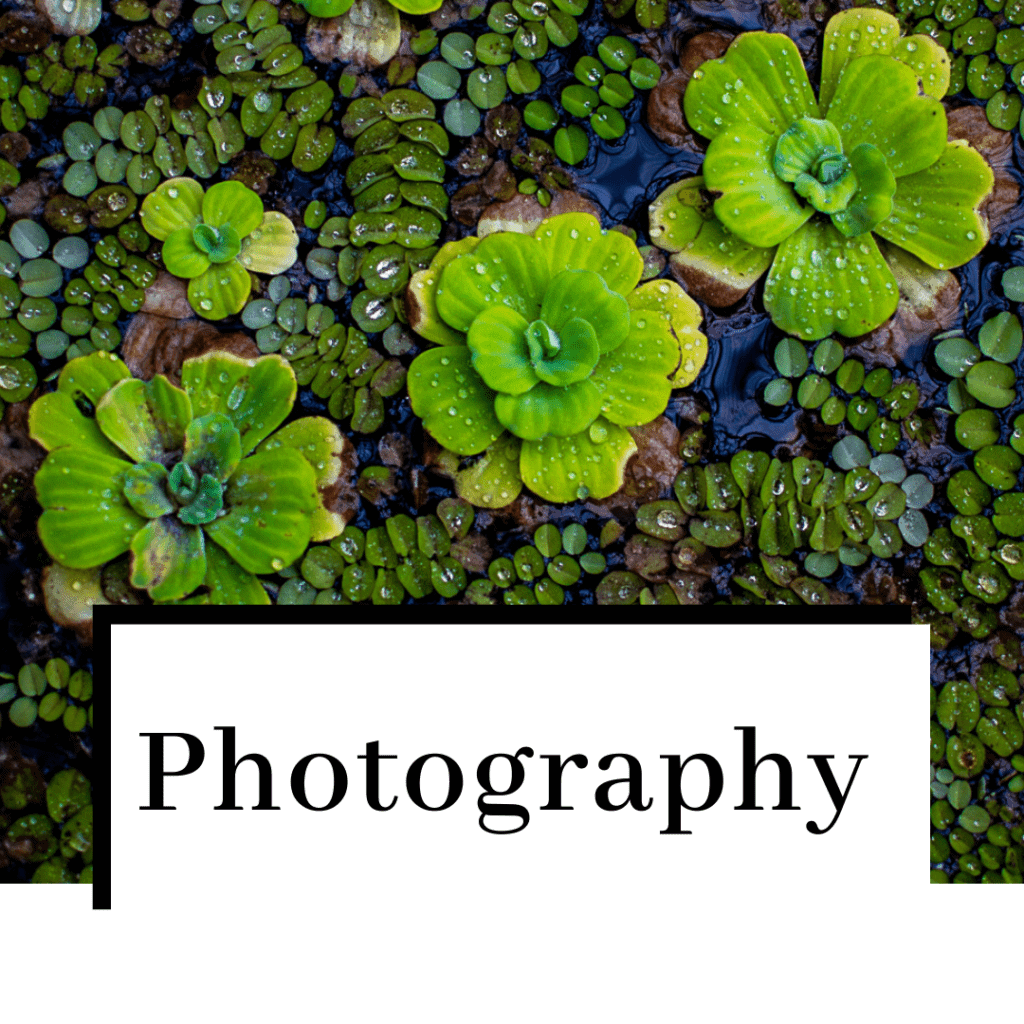 photography-featured-image-1024x1024